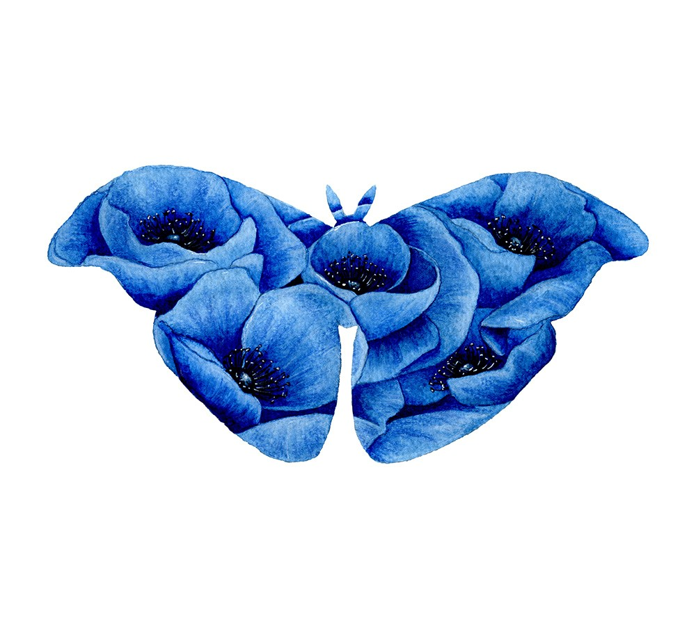 Blue Poppy Moth