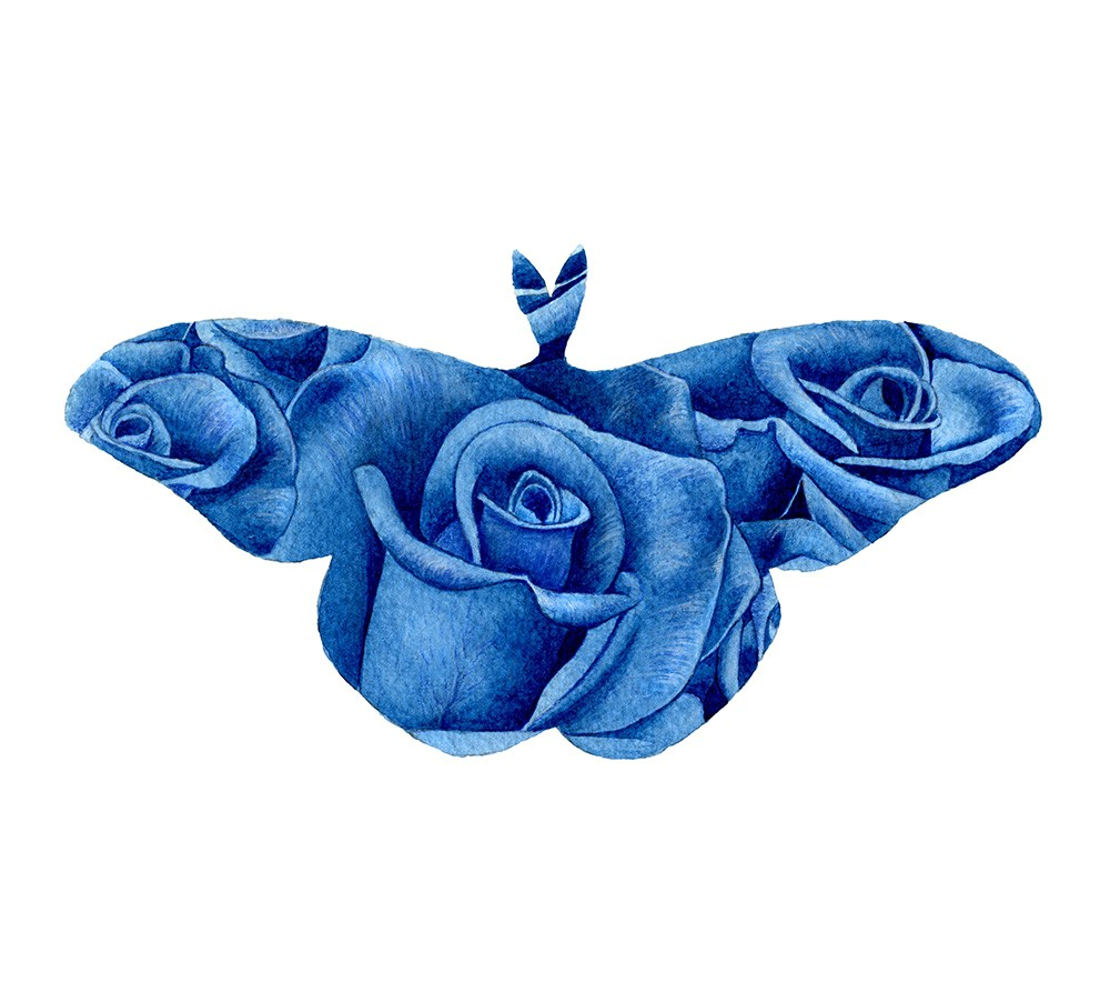 Blue Rose Moth